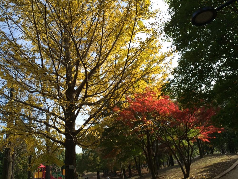 柏の葉公園 景観