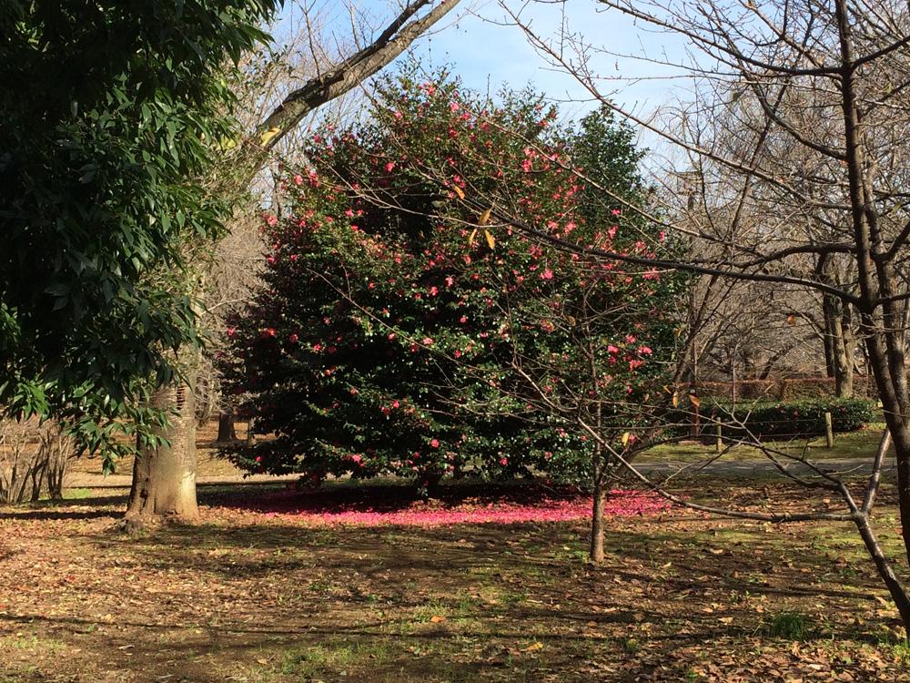 柏の葉公園 木 花