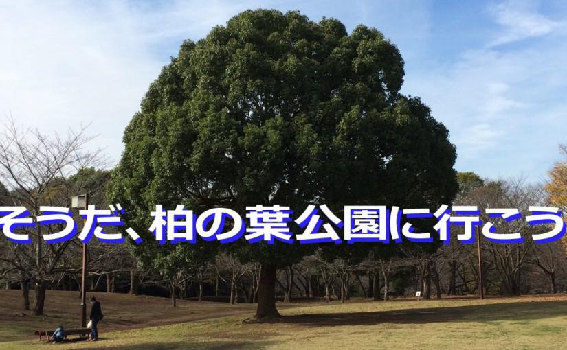 柏の葉公園 木
