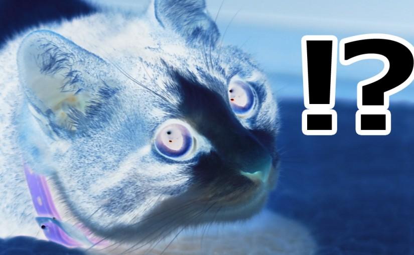 猫 驚き !?