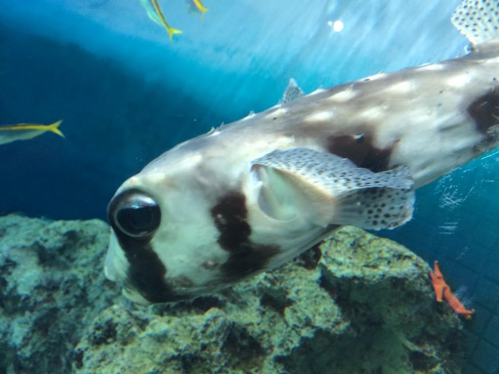 葛西臨海水族園 魚