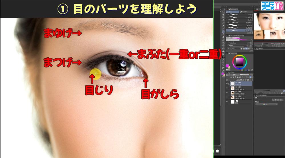 目の描き方 クリップスタジオ 目の構造