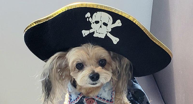 海賊帽をかぶった犬の写真